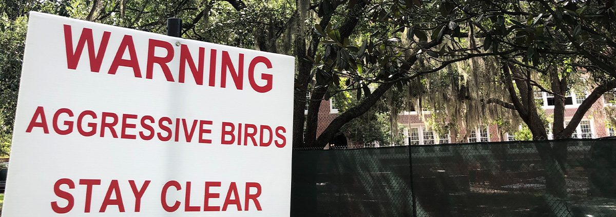 Warning Aggressive Birds Sign