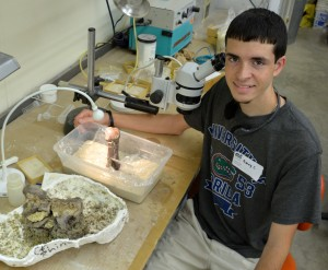 Summer scholar Barry Congressi prepares a rhinoceros vertebrae fossil for display at the Florida Museum of Natural History.