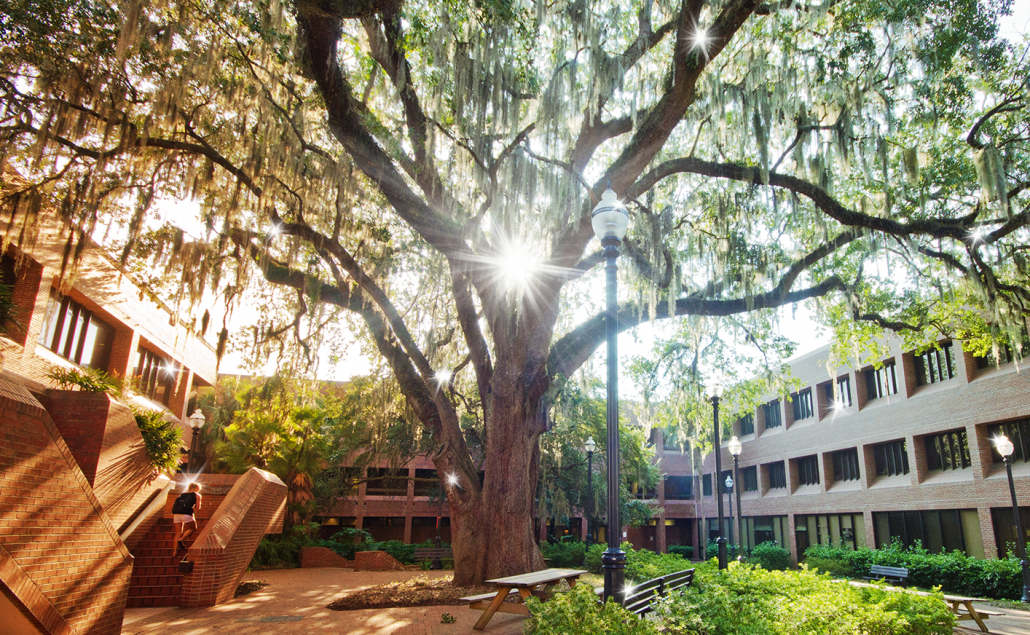 Photo of the tree in the Norman courtyard