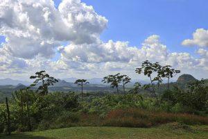 Landscape view of a dense forest